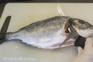 come sfilettare il pesce orata 4